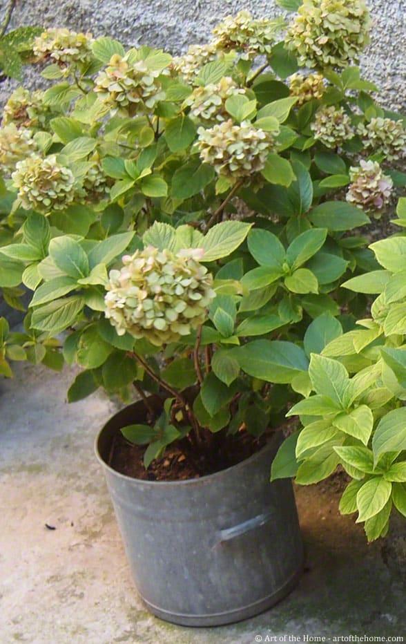 vintage zinc planter