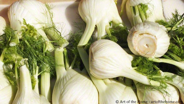 licorice-flavored Fennel